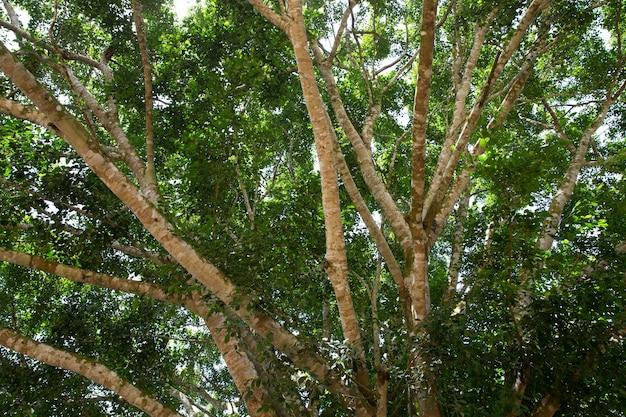 나무에 녹색 지점