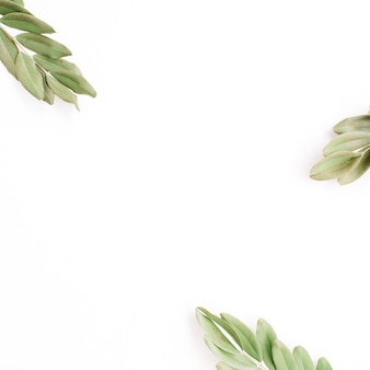 Green branches isolated on white background. flat lay, top view