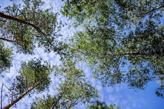 Зеленые ветви деревьев выше против неба.