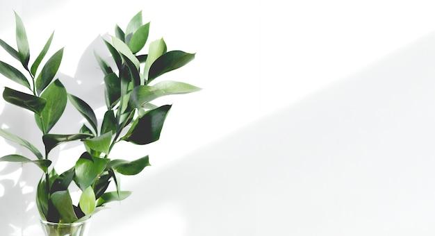 白い壁に緑の枝