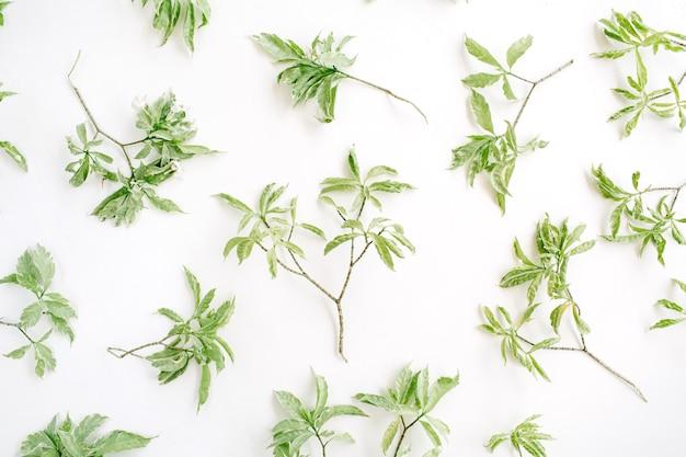 白い背景の上の緑の枝のパターン。