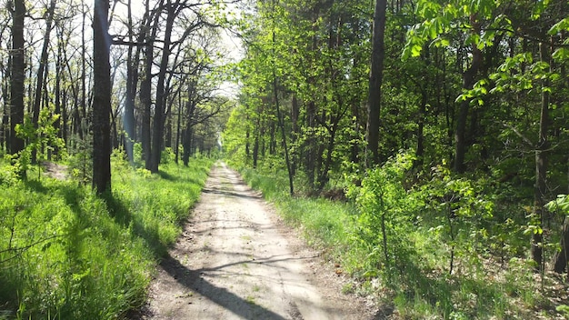 緑の明るい森と汚れた道路の歩道。木、茂み、緑の葉、緑の草のクローズアップ。晴れた朝、輝く太陽光線。自然の背景、自然環境。エコロジー保護