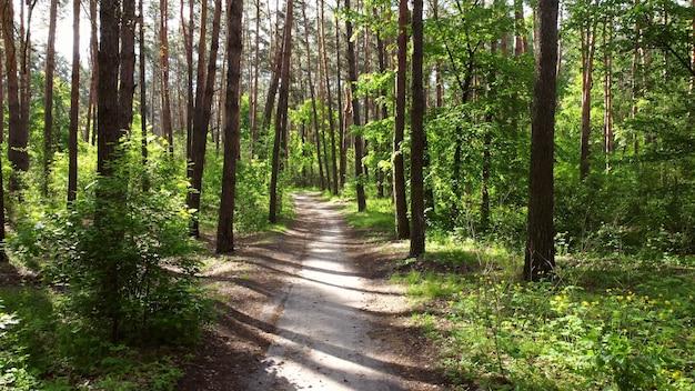 緑の明るい森と汚れた道路の歩道。木、茂み、緑の葉、
