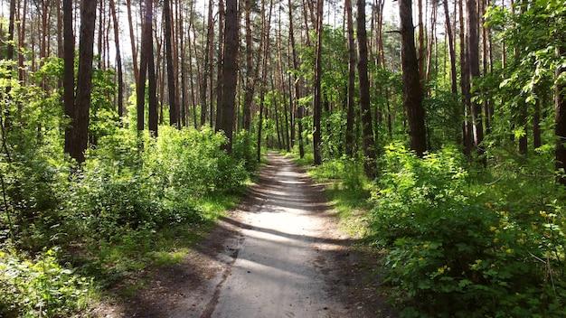 緑の明るい森。木、茂み、緑の葉と緑の草の枝