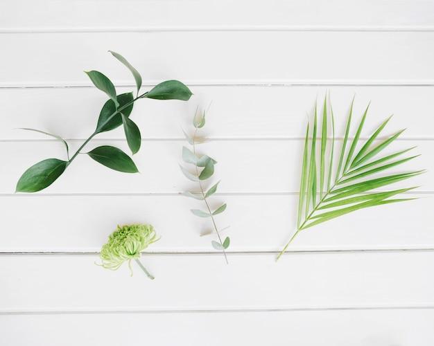 Зеленые яркие листья на белом
