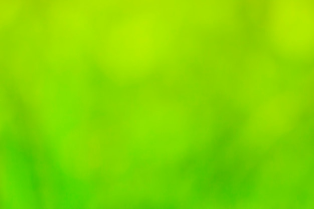 Зеленый яркий летний фон расфокусировки