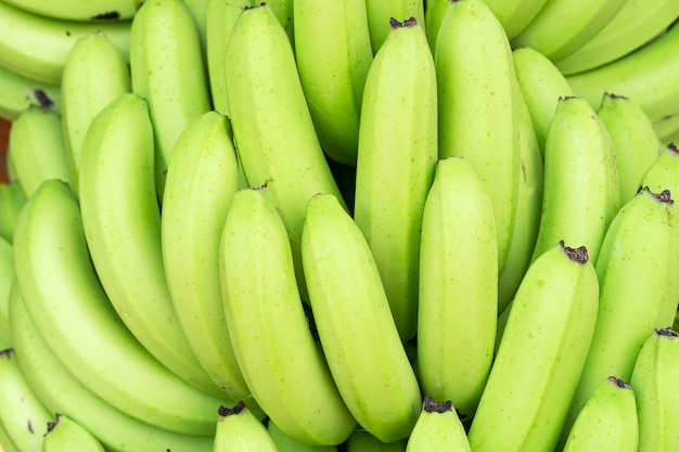 Green bunches of cavendish banana