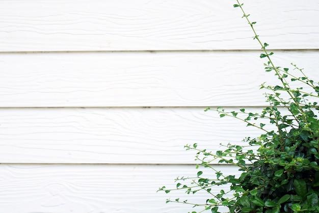 Green bush outside white wooden house