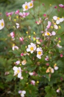 웹과 이슬에 꽃이 있는 녹색 부시, 클로즈업.