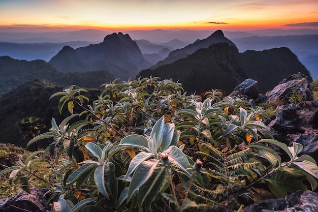 Green bush with sunset on mountain range in wildlife sanctuary at doi luang chiang  dao national park, chiang mai, thailand