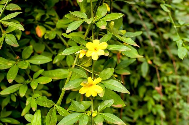 질감 배경에 노란색 꽃과 녹색 부시입니다.