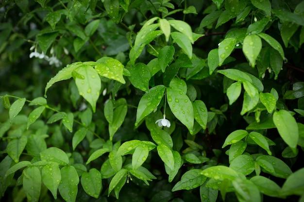 緑の茂みの背景。葉のテクスチャ背景