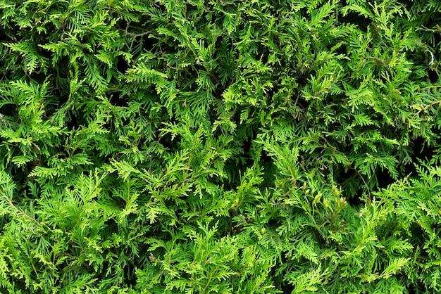 Зеленые кусты подробные текстуры фото фон