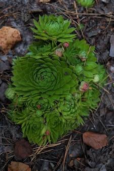 松林に生えている植物の緑の茂み