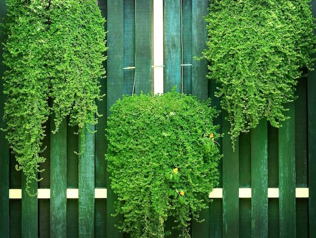 오래 된 나무 벽 배경에 녹색 덤 불입니다.