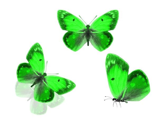 녹색 나비 흰색 배경에 고립입니다. 고품질 사진