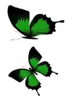 白い背景に分離された緑の蝶。高品質の写真
