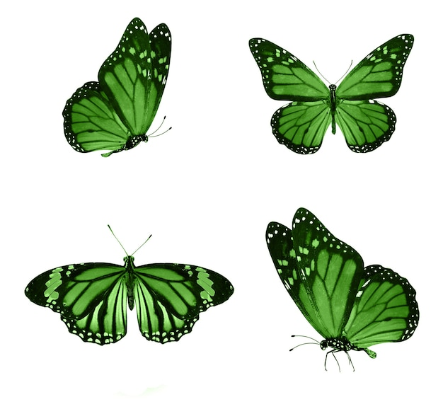 Зеленые бабочки, изолированные на белом фоне. тропические бабочки. насекомые для дизайна. акварельные краски