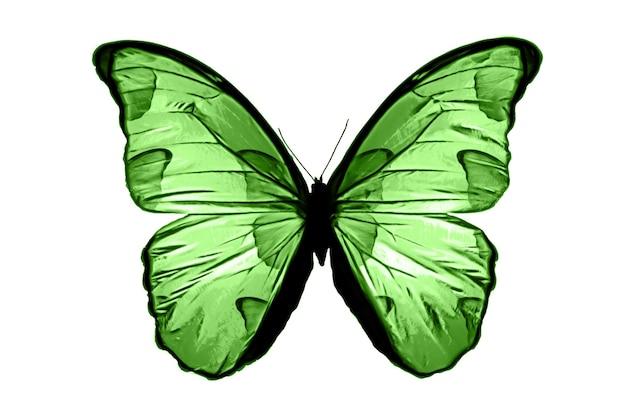緑の蝶は、白い背景で隔離。熱帯の蛾。デザインのための昆虫。水彩絵の具