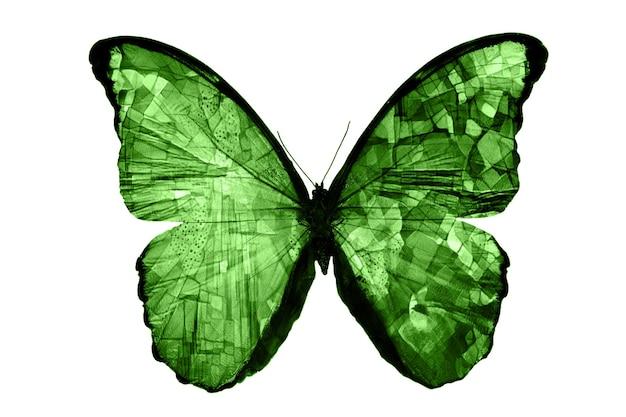 녹색 나비 흰색 배경에 고립입니다. 열대 나방. 디자인에 대 한 곤충입니다. 수채화 물감