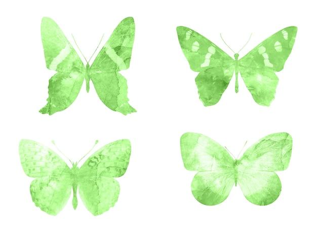 白い背景に分離された緑の蝶。熱帯の蛾