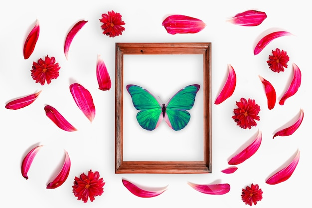 Green butterfly in a frame with petals around. high quality photo