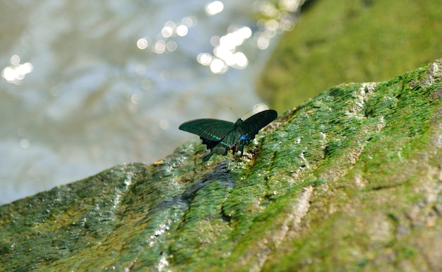 Green butterfly in nature on green and water background