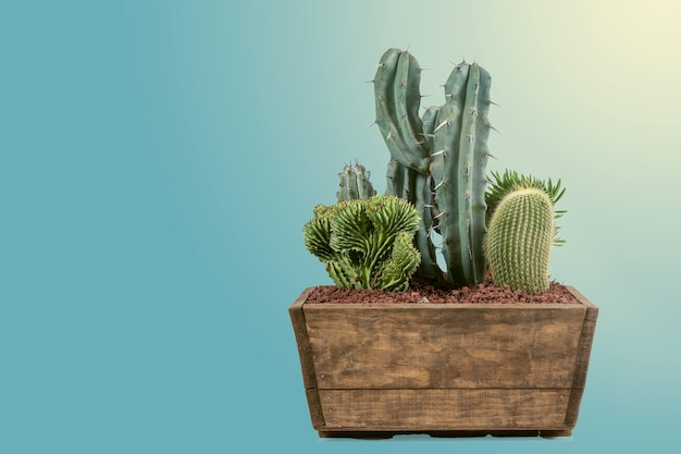 Green cacti in a decorative indoor pot with a matte pastel blue background creative image