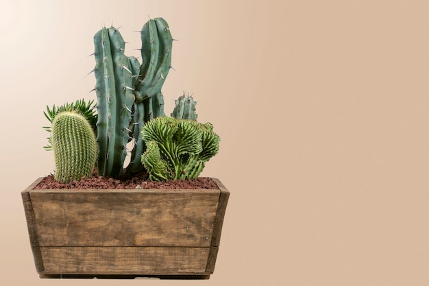 Green cacti in a decorative indoor pot with a matte pastel brown background