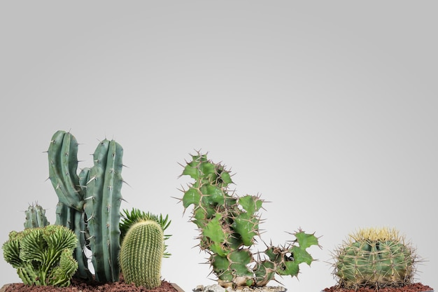Green cacti in indoor decorative pot with gray background