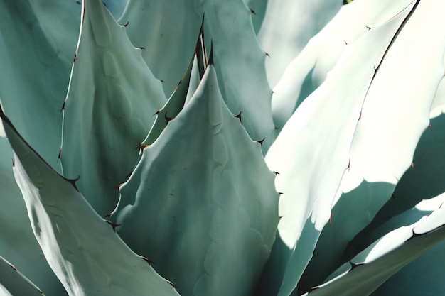 Green cacti leaves macro