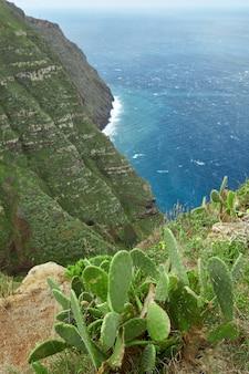 マデイラポルトガルの崖の端にある緑のサボテン