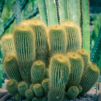 Green cacti and succulents selective focus close up
