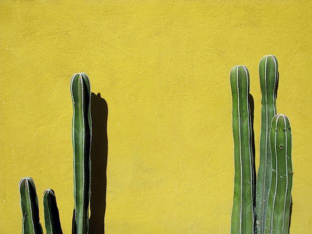 멕시코의 노란 벽에 녹색 선인장