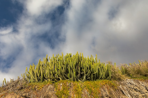 Зеленый кактус и голубое небо с белыми облаками. пуэрто-рико, гран-канария, канарские острова, испания