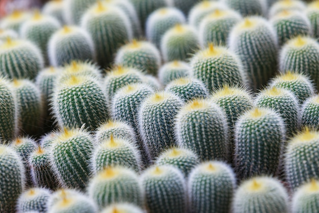 Green cactus background in garden