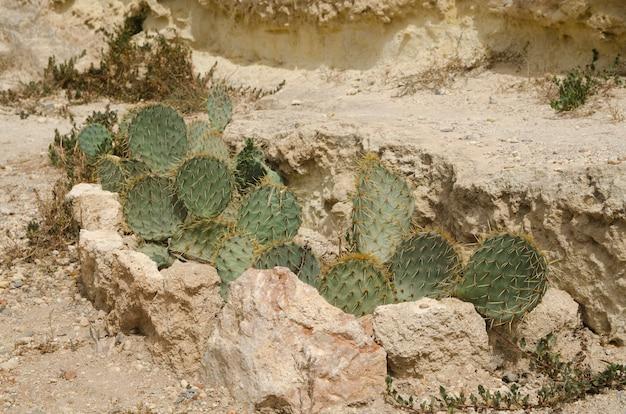 바닥에 있는 바위 사이에 있는 녹색 선인장