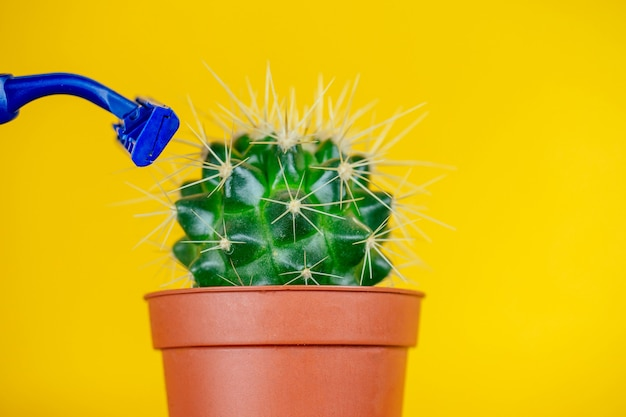 Green cactus in a brown pot and a razor on a yellow background. the concept of depilation, epilation and removal unwanted hair on the body.