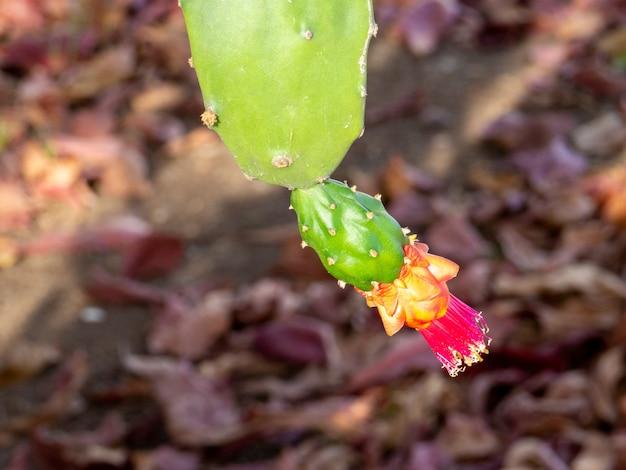녹색 선인장(선인장과) 꽃