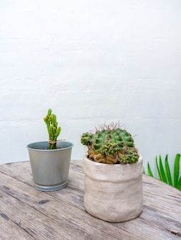 Green cactus in ceramic planter and mini zinc pot on wooden table.