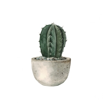 Green cactus in a concrete pot