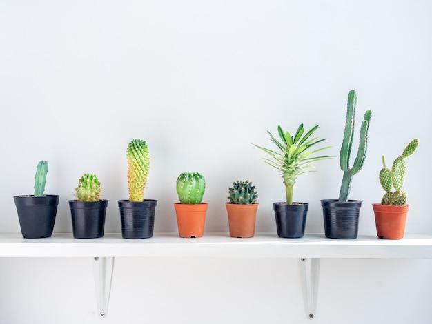 Green cactus in concrete pots on white shelf.