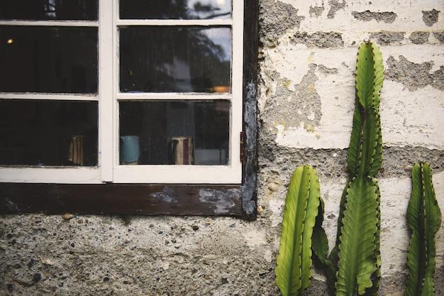 古い窓の近くの古いコンクリートの壁の前で育った緑のサボテン