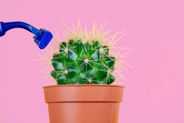Зеленый кактус в коричневом горшке и бритва на розовом фоне. понятие депиляции, эпиляции и удаления нежелательных волос на теле.