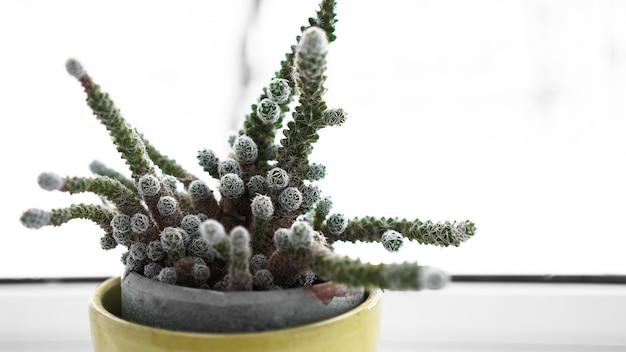 집 식물 창턱에 냄비에 녹색 선인장. 창 밖의 겨울 - 배경을 흐리게