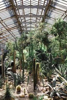 温室のクローズアップで緑のサボテン