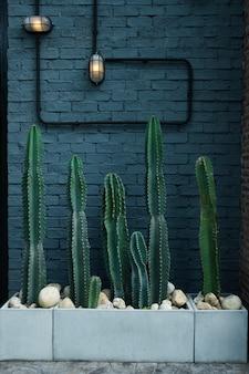 어두운 벽 바탕에 녹색 선인장