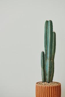 회색 배경에 녹색 선인장