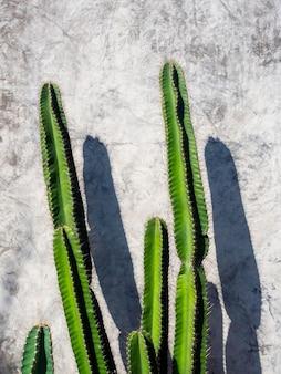 Зеленый кактус на бетонной стене гранж в солнечный день