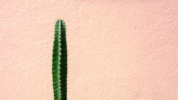 Green cactus plant front the pink cement wall